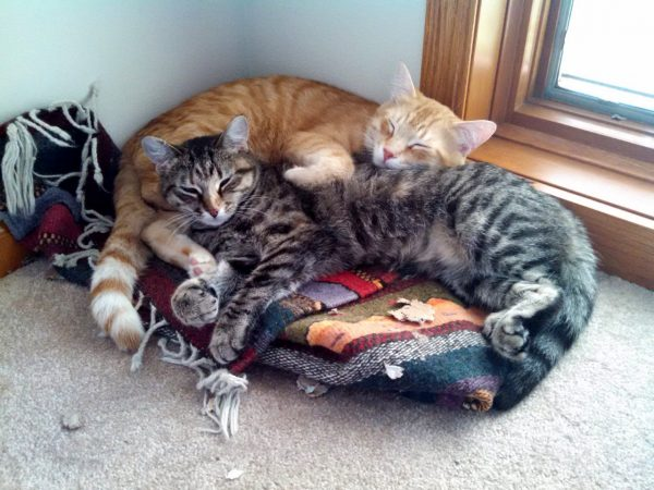 Two cats snuggled up sleeping