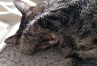 cat sleeping with front paw over eyes