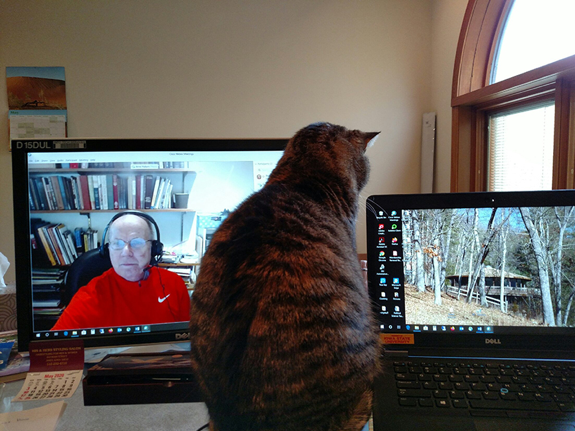 Cat sitting in front of two computer monitors